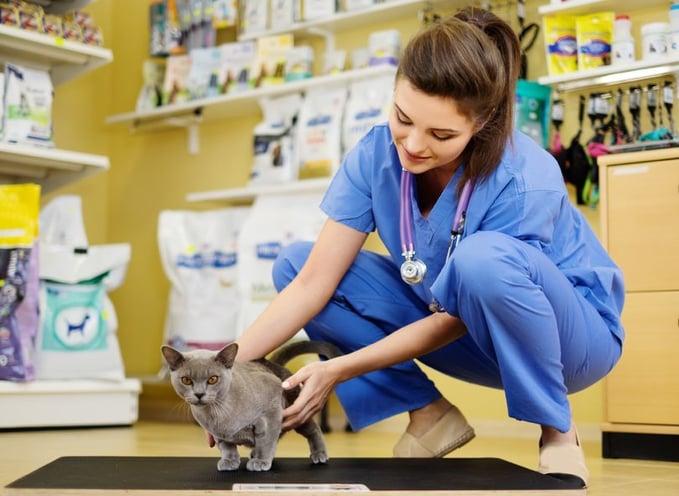 veterinary-teleradiologists.jpg