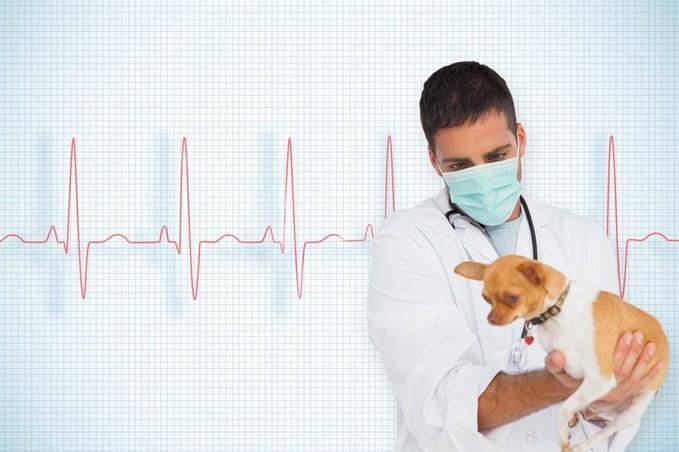 PiX: Veterinary Backup for Surgery.jpeg