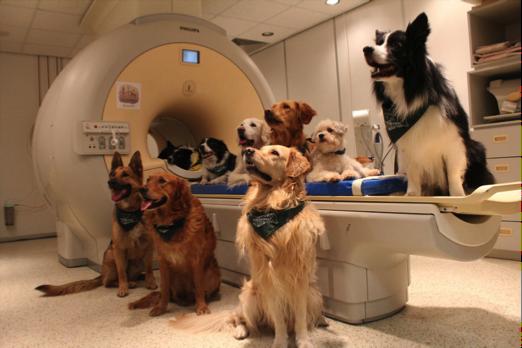 veterinary-medical-imaging