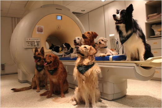 veterinary-medical-imaging